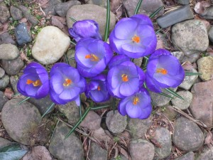 Frühling_3268